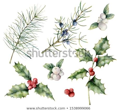 Ayarlamak kış yaprak dökmeyen bitkiler dekoratif bağbozumu Stok fotoğraf © Artspace