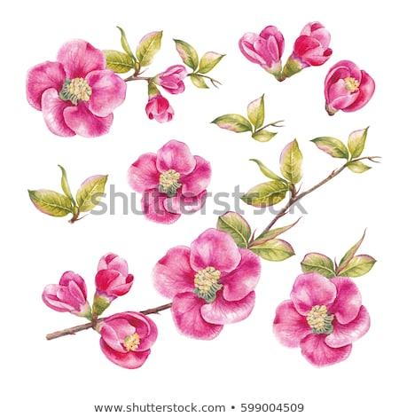 Set of red sakura flowers Stock photo © blackmoon979