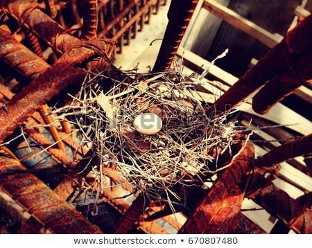 Beyaz kuş yumurta yalıtılmış stüdyo Stok fotoğraf © boroda