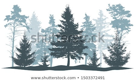 firtree forest in fog Stock photo © Aliftin