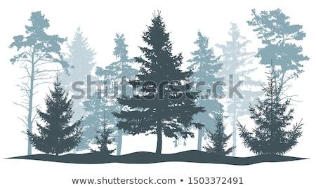 лес · тумана · соснового · деревья · зима · снега - Сток-фото © Aliftin