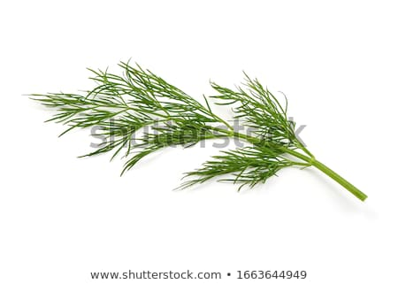 Green dill at the white background Stock photo © SRNR