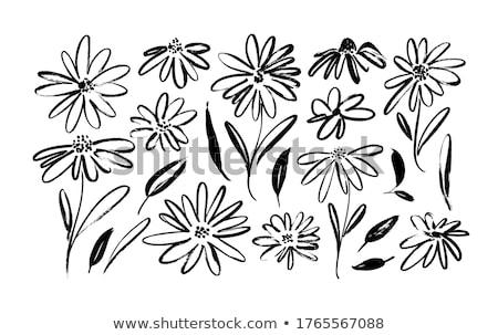Ромашки · растущий · зеленый · области · цветы - Сток-фото © ivonnewierink