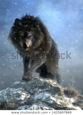 Dire Wolf Stock photo © cteconsulting