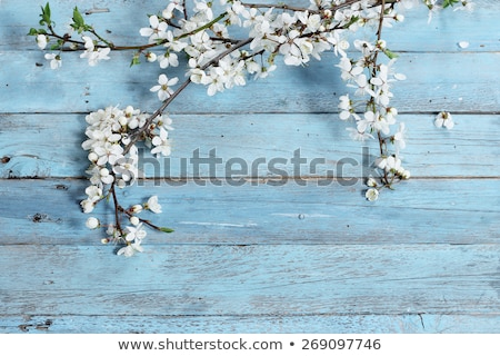 Natural spring and summer background with selective focus and le Stock photo © HASLOO