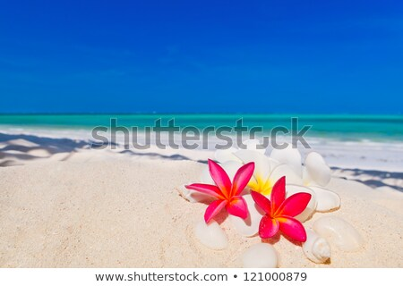 Idyllic tropical scene with frangipani flowers Stock photo © moses