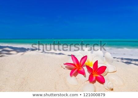 flores · fresco · molhado · preto · pedra · cópia · espaço - foto stock © moses