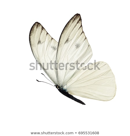 black white spotted Butterfly insect Stock photo © stocker