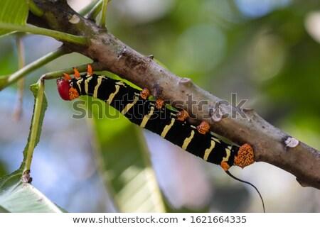 upsidedown butterfly stock photo © dgilder