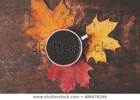 Colorato acero foglie tela ruvida autunno superficie Foto d'archivio © olandsfokus