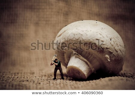 Miniature bûcheron champignons ax macro Photo stock © Kirill_M