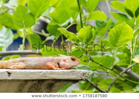 Groene leguaan kruipen alleen illustratie ontwerp Stockfoto © bluering