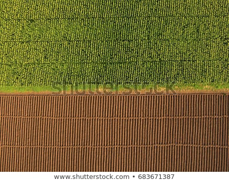 культурный · кукурузы · зерновые · области · фермы - Сток-фото © stevanovicigor