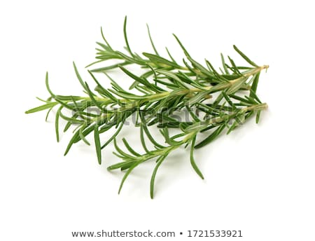 Fresh Rosemary Stock photo © 2tun
