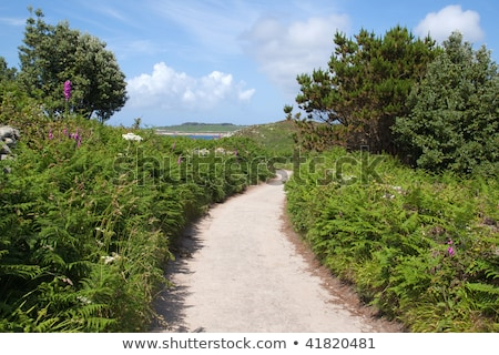 Narrow English country lane, St. Agnes Isles of Scilly. Stock photo © latent