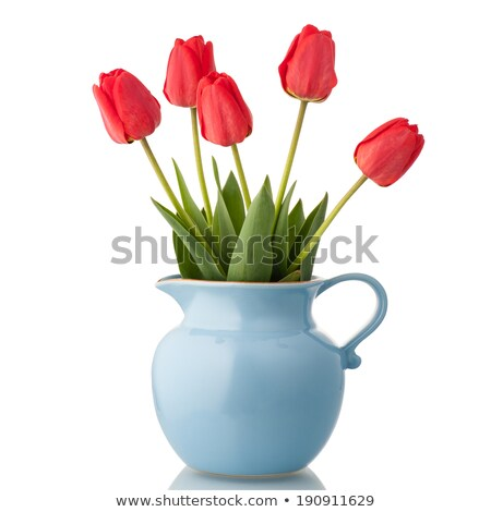 Red tulip in vase isolated. Beautiful flowers in jug Stock photo © popaukropa