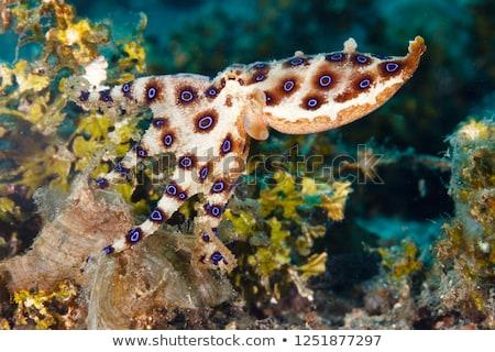 octopus · vrolijk · alle · armen · penseel · potloden - stockfoto © bluering