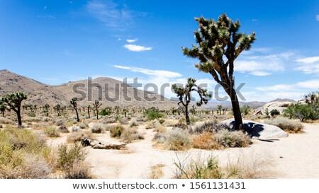 paisagem · deserto · pôr · do · sol · silhuetas · pedras · plantas - foto stock © liolle