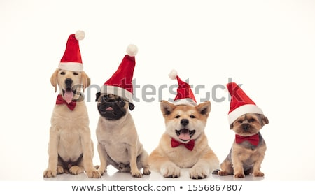 Stock photo: four adorable dogs wearing santa costume and bowtie