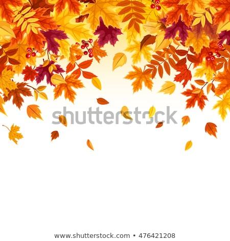 őszi levelek dekoráció ágak levelek fű ősz Stock fotó © odina222