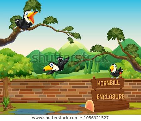 Scene with three hornbill birds in zoo Stock photo © colematt