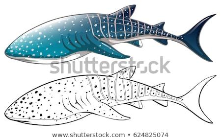 Animal tubarão ilustração fundo exercer tropical Foto stock © colematt