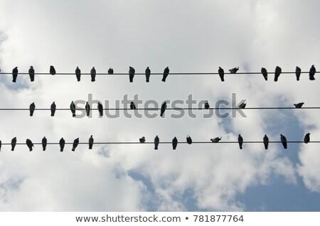 sereg · erő · drótok · ül · természet · telefon - stock fotó © taviphoto