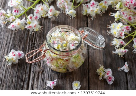 Preparation of tincture from horse chestnut blossoms Stock photo © madeleine_steinbach