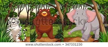 Elefante boschi scena illustrazione arte verde Foto d'archivio © bluering