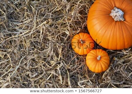 Two Jack Be Little pumpkins with large orange pumpkin  Stock photo © sarahdoow