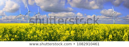 Blooming rapeseed field with wind turbines Stock photo © elxeneize