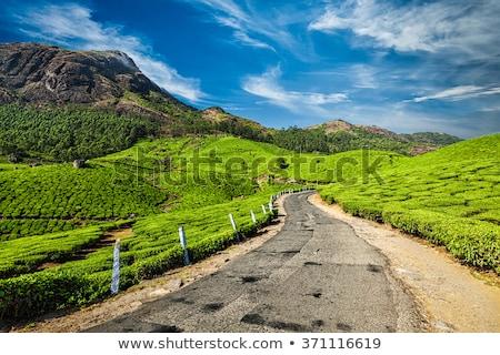 çay Hindistan yeşil çay sabah doğa manzara Stok fotoğraf © dmitry_rukhlenko