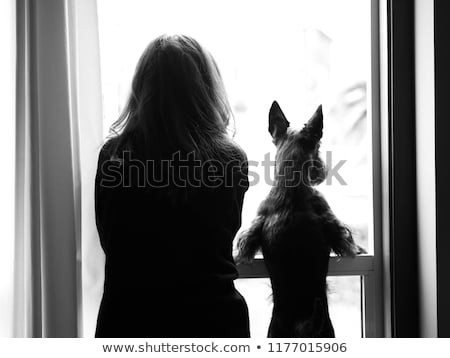 Menina melhor amigo belo mulher jovem bonitinho cachorro Foto stock © iko
