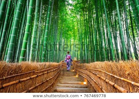 bambu · quioto · Japão · vazio · caminho - foto stock © jeayesy