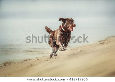 barna · labrador · retriever · kutya · baba · háttér · zöld - stock fotó © elly_l