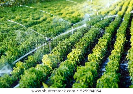 Nawadnianie rolnictwa ziarna dziedzinie wody ziemi Zdjęcia stock © xedos45