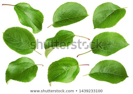 frescos · manzanas · hojas · frutas · rojo · comer - foto stock © Dionisvera