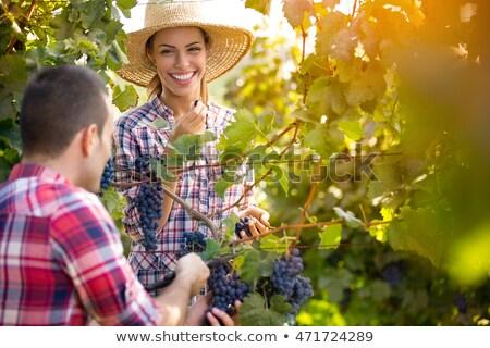 handen · vrouwelijke · oogst · witte · wijnstok · druiven - stockfoto © photography33