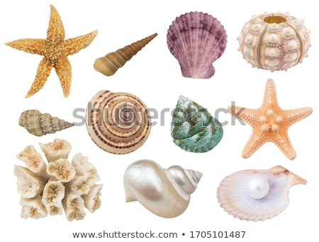 Shells. Set of beautiful cockleshells. Stock photo © Stellis