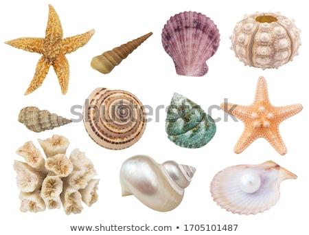 kagylók · szett · gyönyörű · tengerpart · természet · terv - stock fotó © stellis