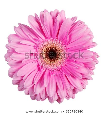Stok fotoğraf: Kırmızı · çiçek · beyaz · su