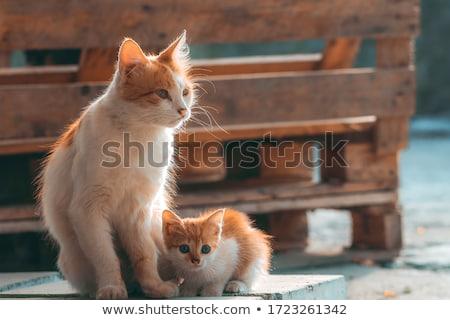 ママ · 子猫 · 猫 · 動物 · 再生 · 安全 - ストックフォト © mikdam