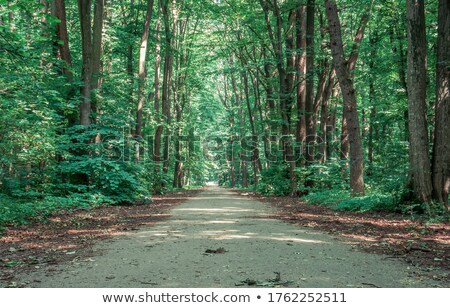 Walkway in forest Stock photo © Witthaya