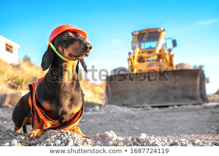 Builder directing Stock photo © photography33