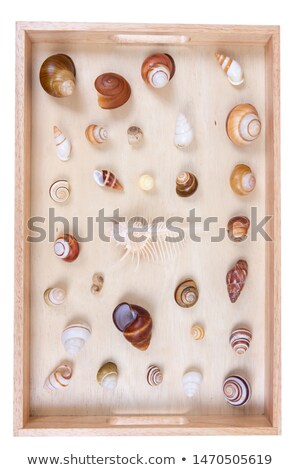Shell collection in group Stock photo © AlessandroZocc