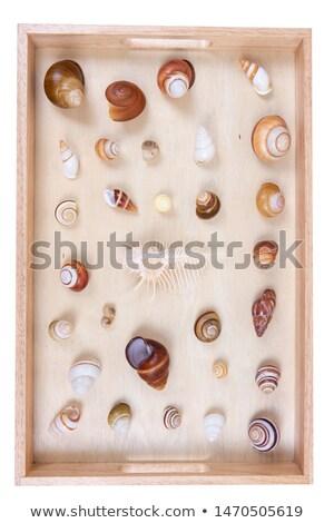 invertebrado · coleção · africano · invertebrados · insetos - foto stock © alessandrozocc