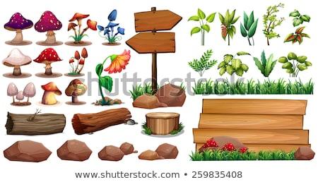 Setas árboles flores textura árbol alimentos Foto stock © mariephoto