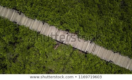 avventura · legno · corda · giungla · ponte · sospeso · foresta · pluviale - foto d'archivio © tony4urban