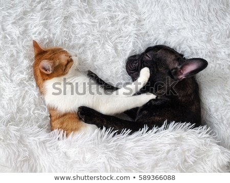 rouge · noir · chien · lit · isolé · blanche - photo stock © shanemaritch
