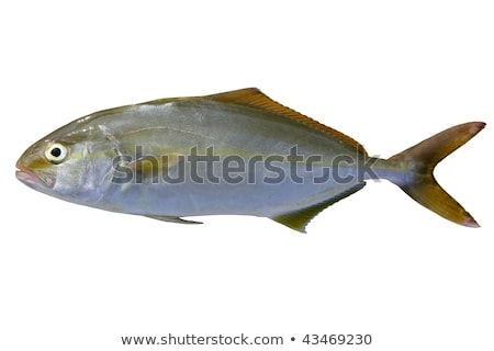 рыбы · продажи · рынке · свежие · продовольствие · природы - Сток-фото © lunamarina